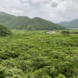 奄美大島の原生林とマングローブ