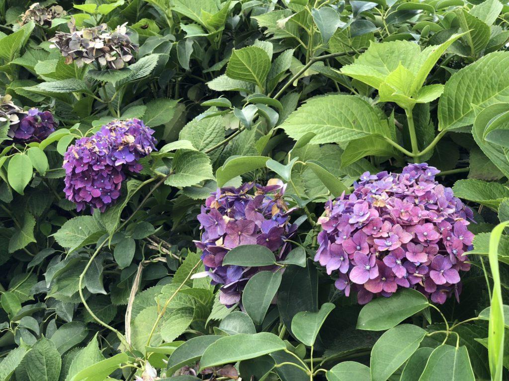 桜島の旅の里の庭