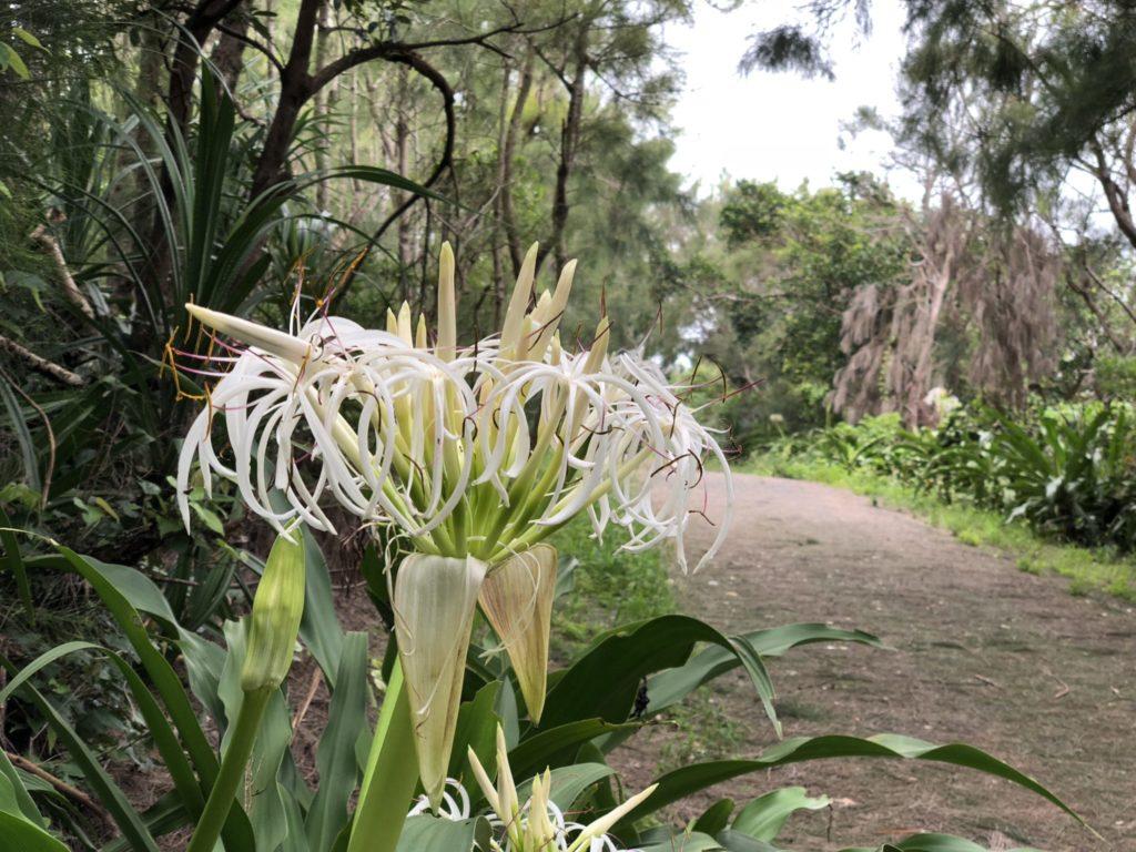 奄美大島のコーラルパームスの海岸沿いの遊歩道
