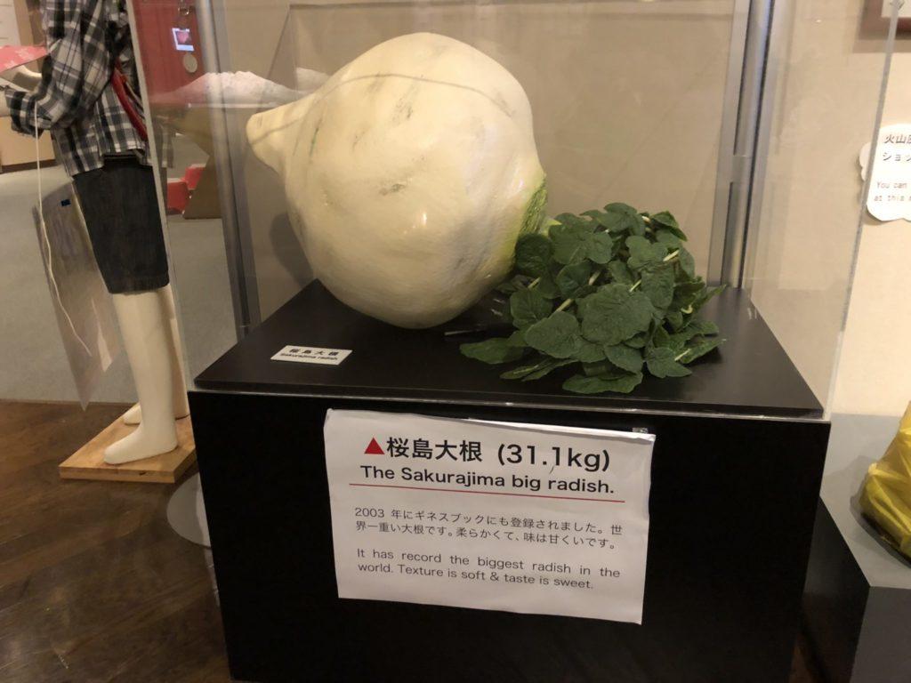 桜島ビジターセンターの桜島大根