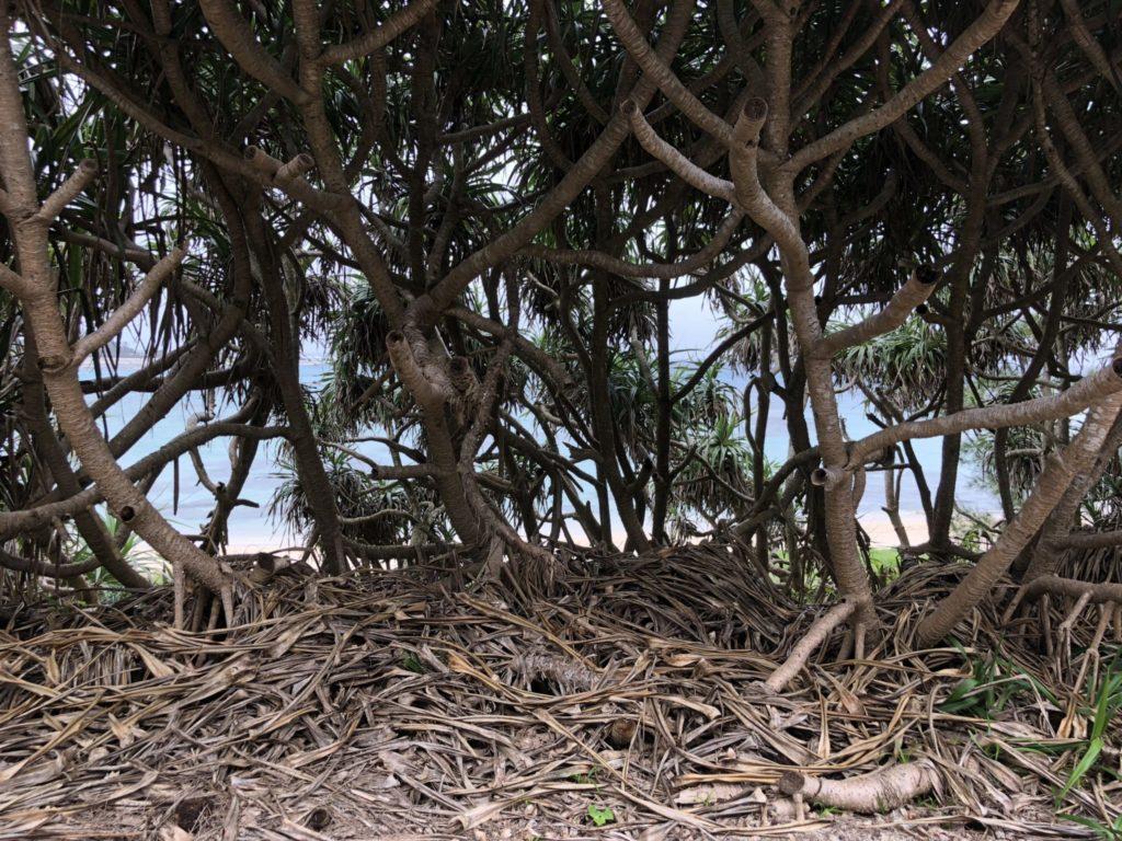 奄美大島の土盛海岸の裏の薮
