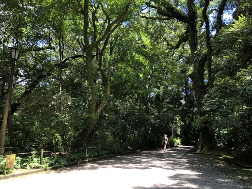 城山展望台への道