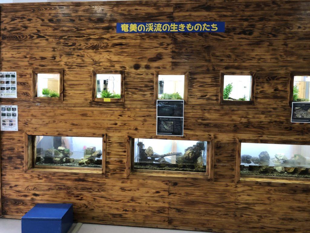 奄美大島のマングローブパークの展示室